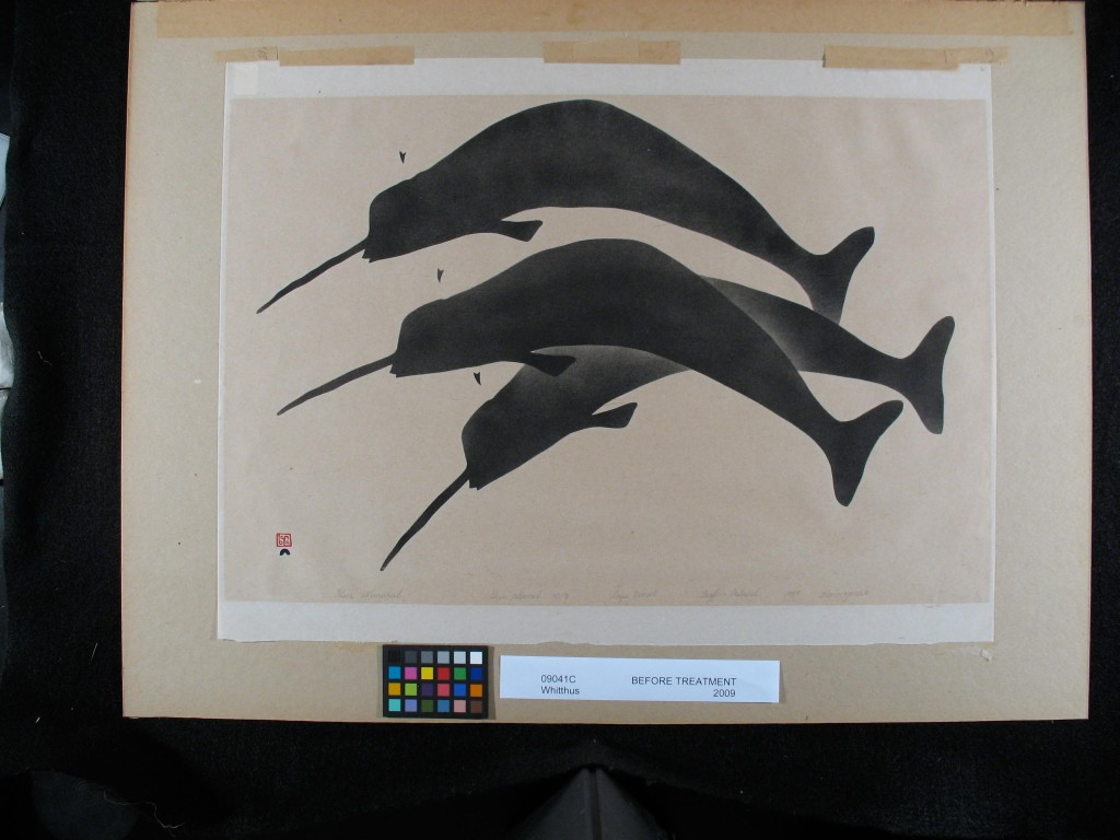 Three Narwal by Kananginak Pootoogook. Before Conservation Treatment.